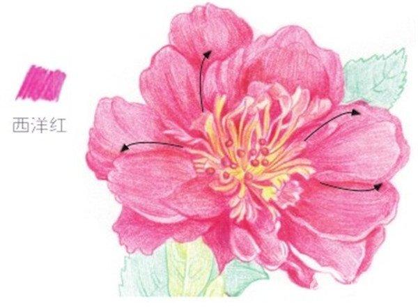 花瓣背景素材浅粉色