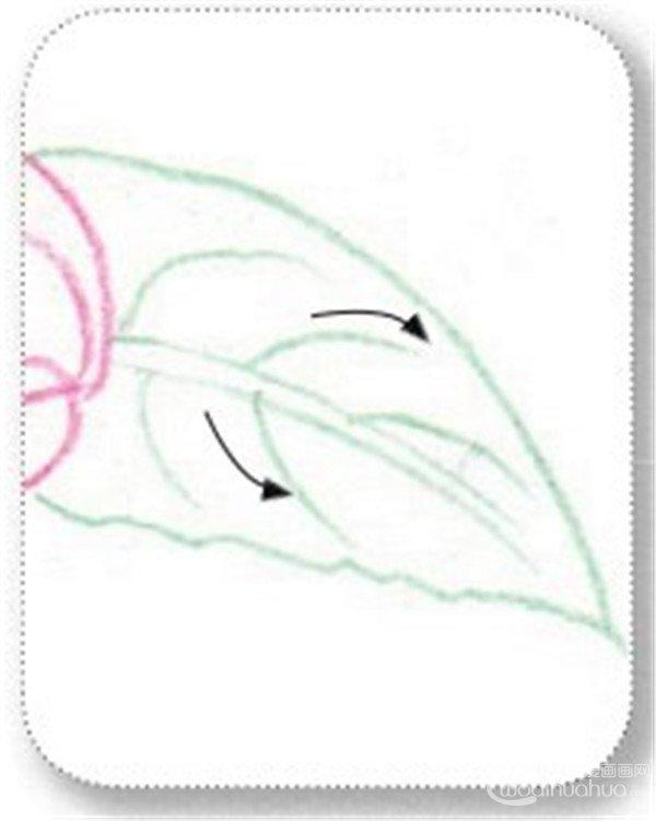 (5)用粉绿色的铅笔涂抹山茶花的叶子.