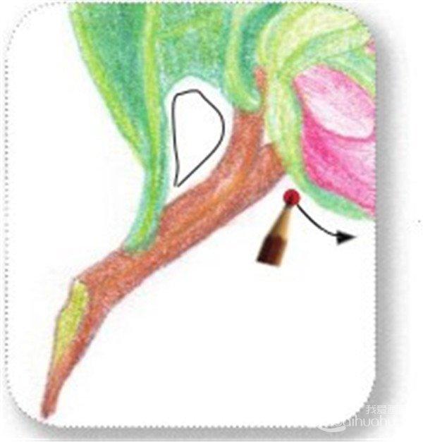 (11)再用赭石色的铅笔11将山茶花的暗部上一遍颜色.