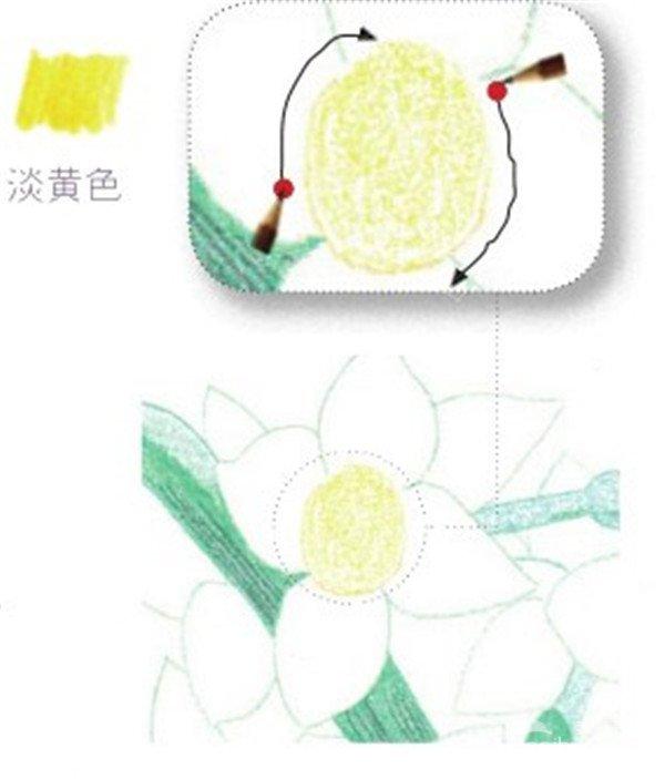 北京画室_彩铅水仙的绘画步骤(一)