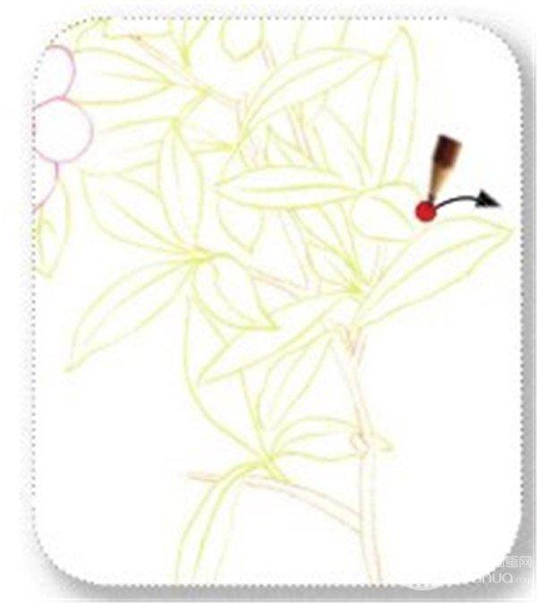 > 彩铅石榴花的绘画技法(6)      3,绘制石榴花的叶和茎    (1)用柠檬