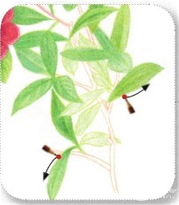 花的根茎叶结构图