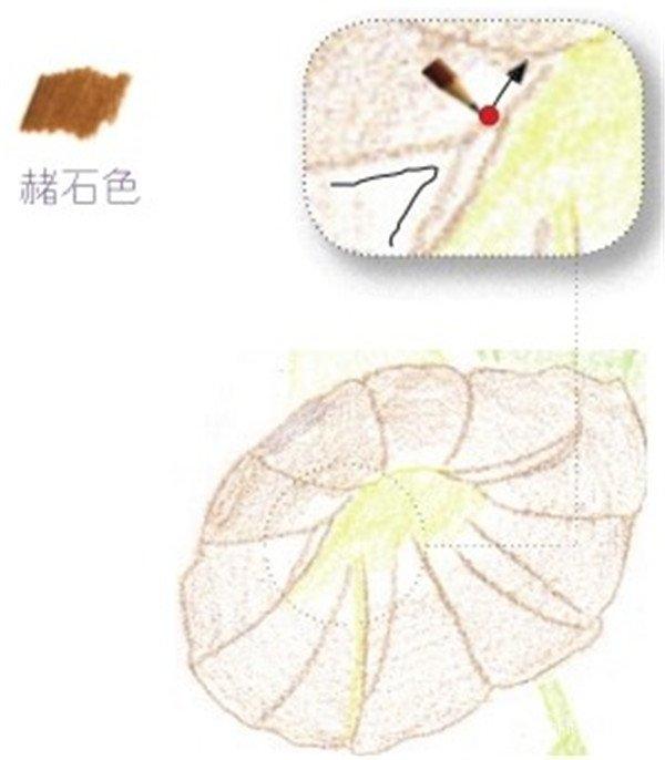 彩铅牵牛花的绘画步骤(4)