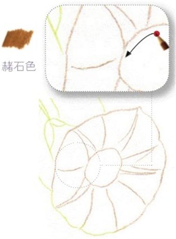 彩铅牵牛花的绘画步骤(5)