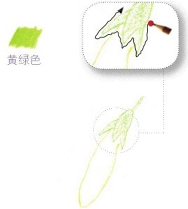 (10)用柠檬黄色的铅笔画出花苞的主要外部轮廓,注意外形要准确。  绘制牵牛花的花瓣部分十 (11)用黄绿色的铅笔画出花萼的颜色,花萼的锯齿状结构要表现出来。  绘制牵牛花的花瓣部分十一 (12)用橘黄色的铅笔画出花苞的暗部。因为花苞较小,所以笔尖一定要细。  绘制牵牛花的花瓣部分十二