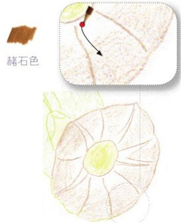 (7) 重复上一朵花朵的绘制步骤,勾画其结构。  绘制牵牛花的花瓣部分七 (8)用赭石色的铅笔在花朵上平铺一层作为底色。  绘制牵牛花的花瓣部分八 (9)最后用柠檬黄色的铅笔加深花心,并用熟褐色的铅笔画出花朵的纹理。  绘制牵牛花的花瓣部分九