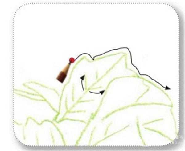 彩铅牵牛花的绘画步骤(9)