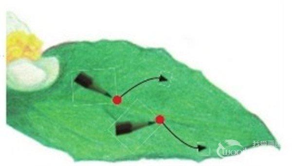 彩铅茉莉花的绘画步骤(8)