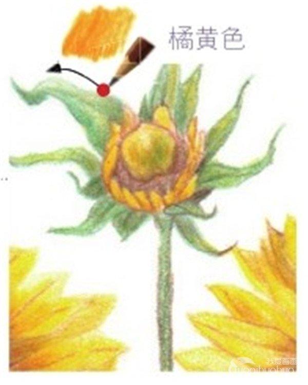 学画画 其他绘画教程 > 彩铅向日葵的绘画技法(7)      (13)选用柠檬