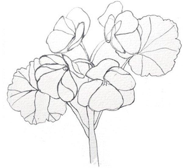出海棠花的线稿轮廓。  海棠花的绘画步骤一 2、接着用铅笔画出花朵的明暗关系。  海棠花的绘画步骤二 3、用朱红色加上橙色调入充分的水,画出花朵上比较浅的颜色。  海棠花的绘画步骤三 4、继续在上一个步骤中的颜料里面加一点大红色,使颜色更加鲜艳,给花瓣第二遍上颜色。  海棠花的绘画步骤四 5、最后用浅绿色加上一点柠檬黄色调和,画出叶子的颜色。  海棠花的绘画步骤五