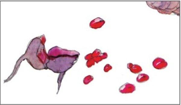 水彩纵透视法松果与橡子绘画技法(4)