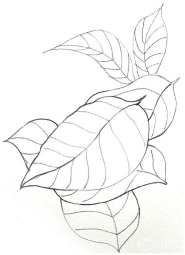 水彩重叠法叶片的绘画步骤 1,摘几片叶子做写生