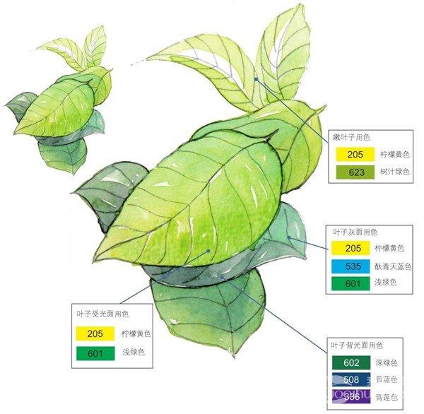 水彩画教程_学画画