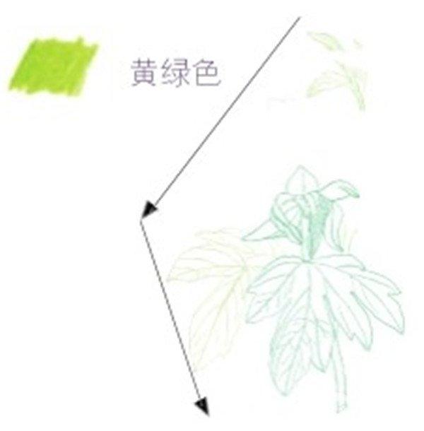 出叶片,注意叶脉的走向要顺着叶子的走向。  芍药花的线稿绘制二 (3)用黄绿色的铅笔画出花苞左下方的叶子,这片叶子比右边的小,在画时要有所对比。  芍药花的线稿绘制三 (4)用黄绿色的铅笔勾画出花苞上面的小部分叶片,在勾画时要给花朵留出位置。  芍药花的线稿绘制四 (5)用蓝绿色的铅笔勾