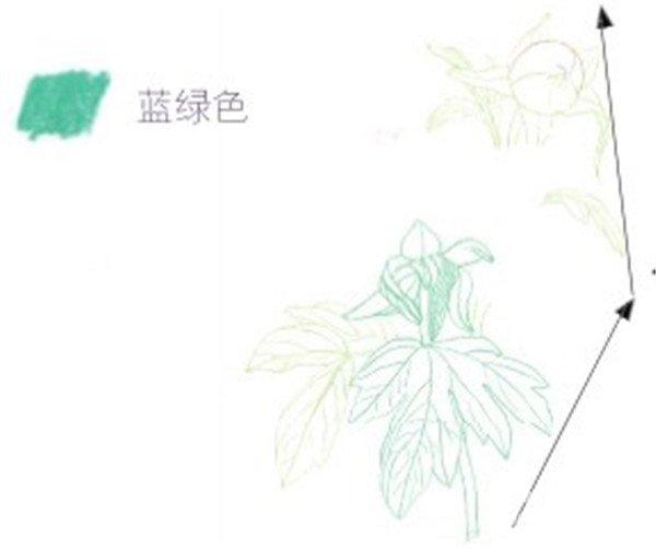 柳树花苞幼儿绘画图
