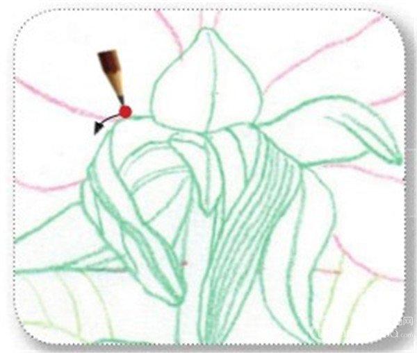彩铅芍药花的绘画步骤(6)