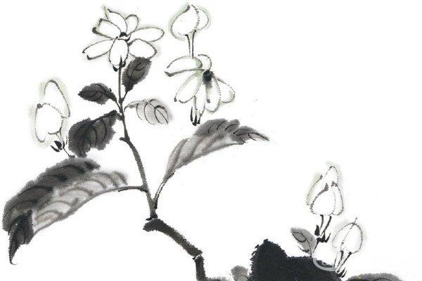 水墨茉莉花的绘画教程