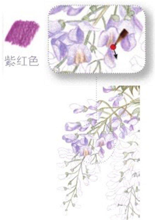 (5)同步骤01,用浅紫色的铅笔为另一朵紫藤花最上面的花瓣进行上色。  绘制紫藤花的花瓣部分五 (6)在花朵的中间部分用紫红色的铅笔为花瓣叠加一些颜色丰富画面。  绘制紫藤花的花瓣部分六 (7)用浅紫色的铅笔勾画最下面花瓣的颜色,注意没有颜色的地方可以留白。  绘制紫藤花的花瓣部分七 (8)整体调整画面的明暗关系,用紫色的铅笔加深对花瓣暗部颜色的刻画。  绘制紫藤花的花瓣部分八