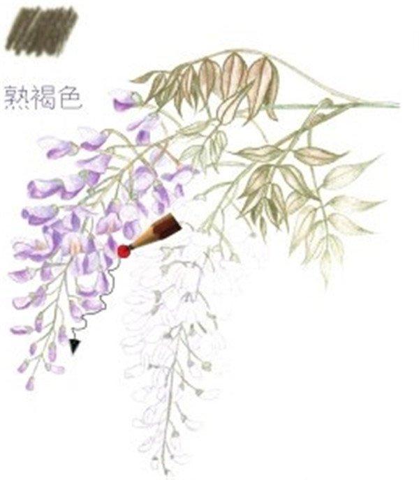 4、紫藤花的细致刻画 (1)用浅紫色的铅笔给花朵进行上色,留白的位置记得空出来。  紫藤花的细致刻画一 (2)用熟褐色的铅笔涂抹花藤的颜色,用色也要统一,从而使画面更加具有整体感。  紫藤花的细致刻画二 (3)花藤下面零零散散的小花苞可以用浅紫色的铅笔细致刻画,从而使画面看起来更加完整。  紫藤花的细致刻画三 绘制紫藤的花朵时,可以在深浅紫色上加些紫红进行叠加,花朵的颜色会更加饱满。