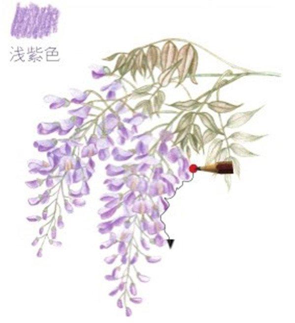 彩铅紫藤花的绘画步骤(7)_水彩画教程_学画画_我爱