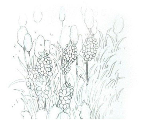 水彩模糊法葡萄风信子的绘画教程(2)
