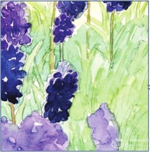 水彩模糊法葡萄风信子的绘画教程(3)