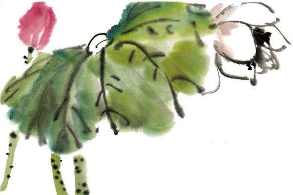水墨荷花的绘画教程