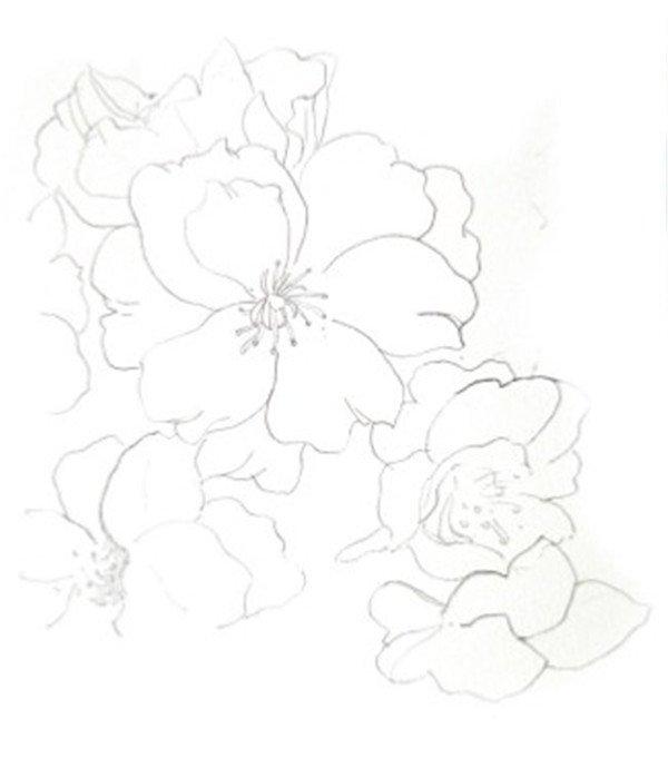 水彩淡化法樱花的绘画技法 2
