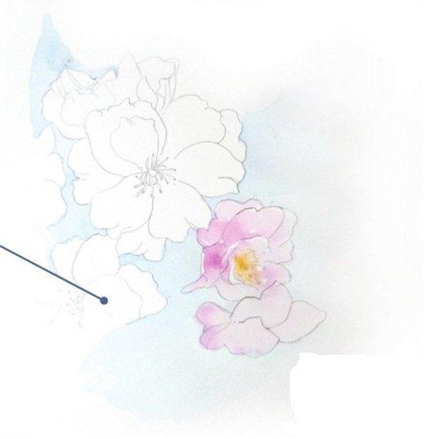 水彩淡化法樱花的绘画技法(3)