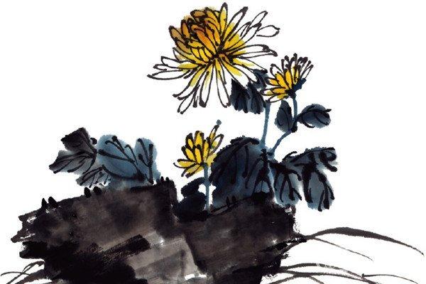 水墨菊花的绘画步骤