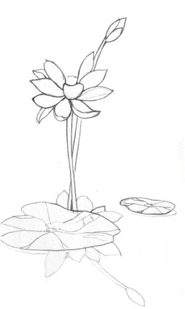 荷花倒影水彩绘画技法(2)