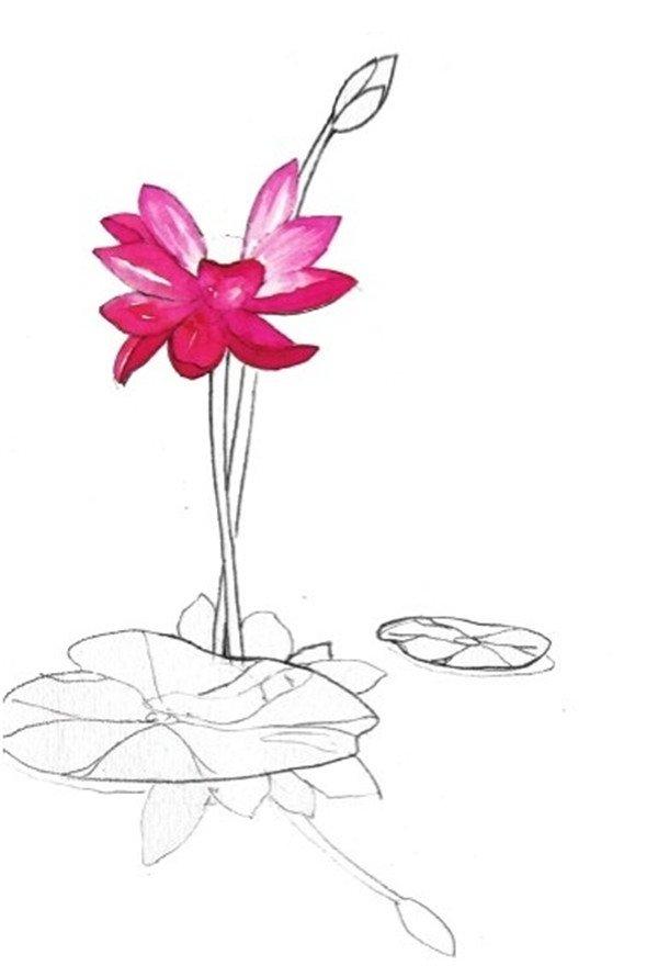 1、先画出一朵荷花的轮廓和湖面中的影子,然后画出湖面上的两片叶子作为点缀。  荷花倒影水彩绘画步骤一 2、先用胭脂红色加入大量的水画出荷花花瓣上浅色的颜色。  荷花倒影水彩绘画步骤二 3、用胭脂红色加上大红色继续画花瓣的颜色。  荷花倒影水彩绘画步骤三