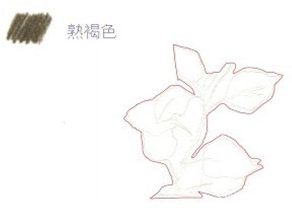 二,彩铅扶桑花的绘画步骤    1,扶桑花的线稿绘制    (1)用熟