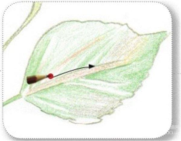 彩铅扶桑花叶子纹路