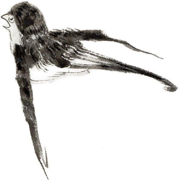 水墨燕子的绘画步骤二