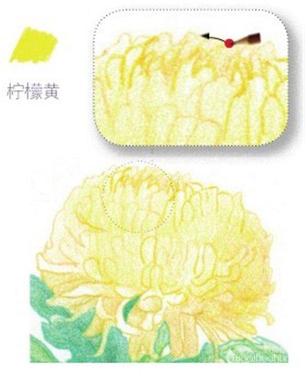 彩铅黄菊花的绘画技法(4)      2,绘制黄菊花的花瓣部分    (1)用柠檬