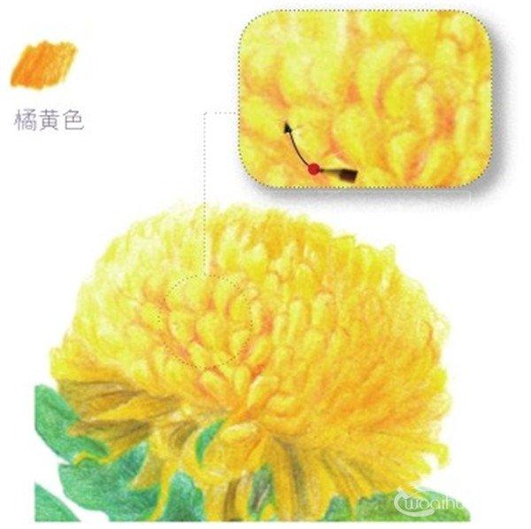 其他美术教程 > 彩铅黄菊花的绘画技法(5)      (4)用柠檬黄色的铅笔