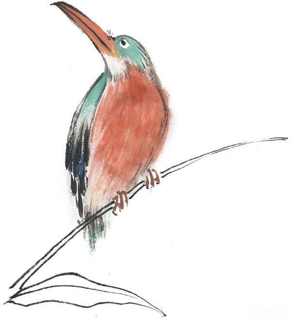水墨翠鸟的绘画步骤三 中国有3种:斑头翠鸟、蓝耳翠鸟和普通翠鸟.
