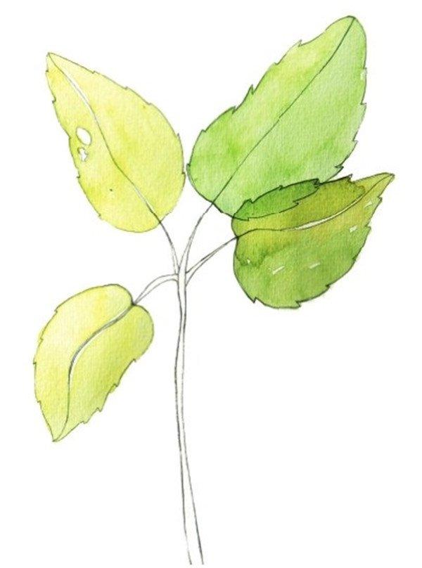 水彩树叶绘画技法图片