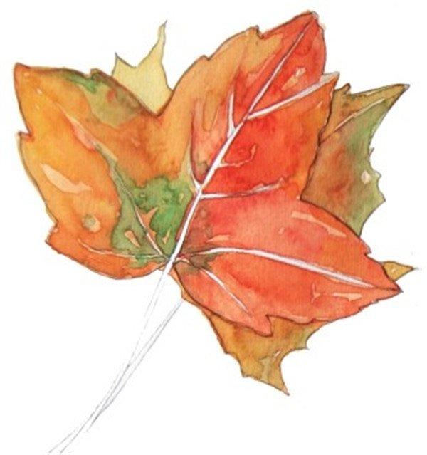 4、用浅绿色加上一点橙色调和,然后等上一层颜色干了之后画在如上(中)图的位置。用橙色加上浅绿色来加深下面那片叶子的颜色。  水彩枫叶绘画技法步骤四 5、用橙色加上适量的水来画叶片的脉络和叶梗的颜色。  水彩枫叶绘画技法步骤五 6、最后用大红色加上一点青莲色画出叶片上深色的部分,然后用牙刷蘸取颜料用手拨牙刷的毛,将颜料泼到叶片上形成自然的、斑驳的印迹。  水彩枫叶绘画技法步骤六 枯叶与嫩叶的质感也是不相同的,枯叶缺失了很多水分,要表现出枯叶干枯的效果以及上面不同的斑纹,一起来绘画美丽的水彩枫叶吧。