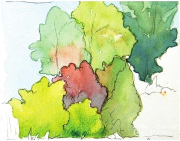 水彩树丛绘画步骤五