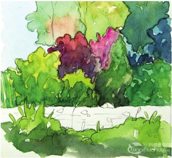 水彩树丛绘画步骤八
