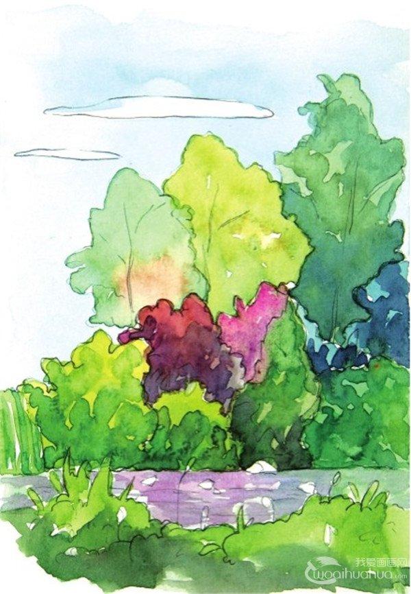 水彩树丛绘画步骤九