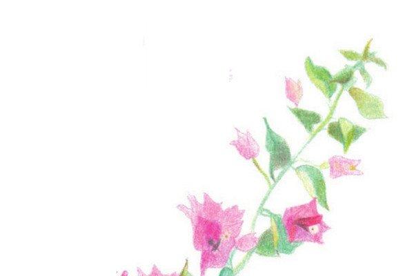彩铅叶子花的绘画技法