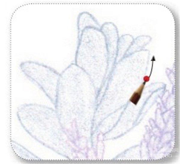 彩铅紫色迎春花的绘画技法(4)