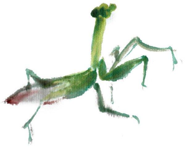 螳螂彩铅矢量图