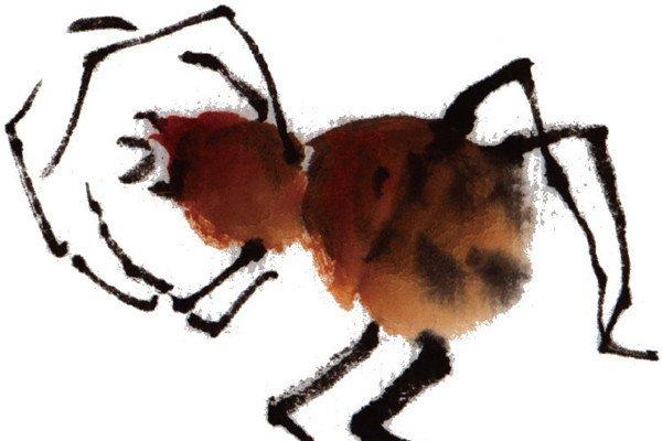 水墨蜘蛛的绘画步骤