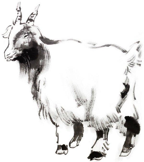 学画画 国画教程 禽鸟虫鱼 > 国画羊的绘画步骤(2)