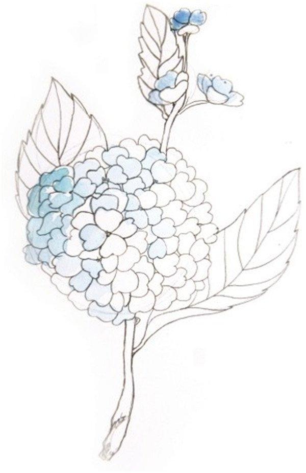 各种小花的简笔画及步骤