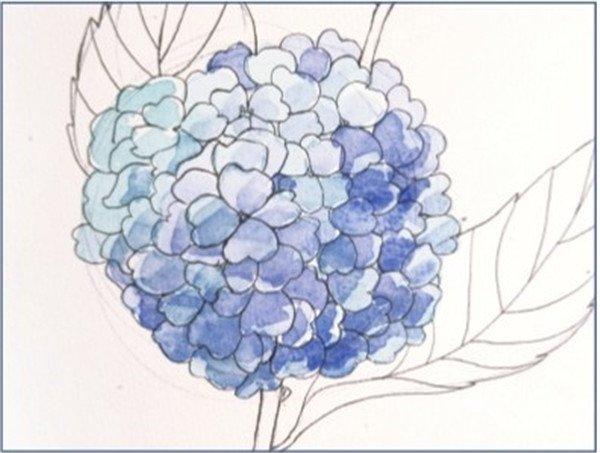 水彩紫阳花的绘画步骤(2)
